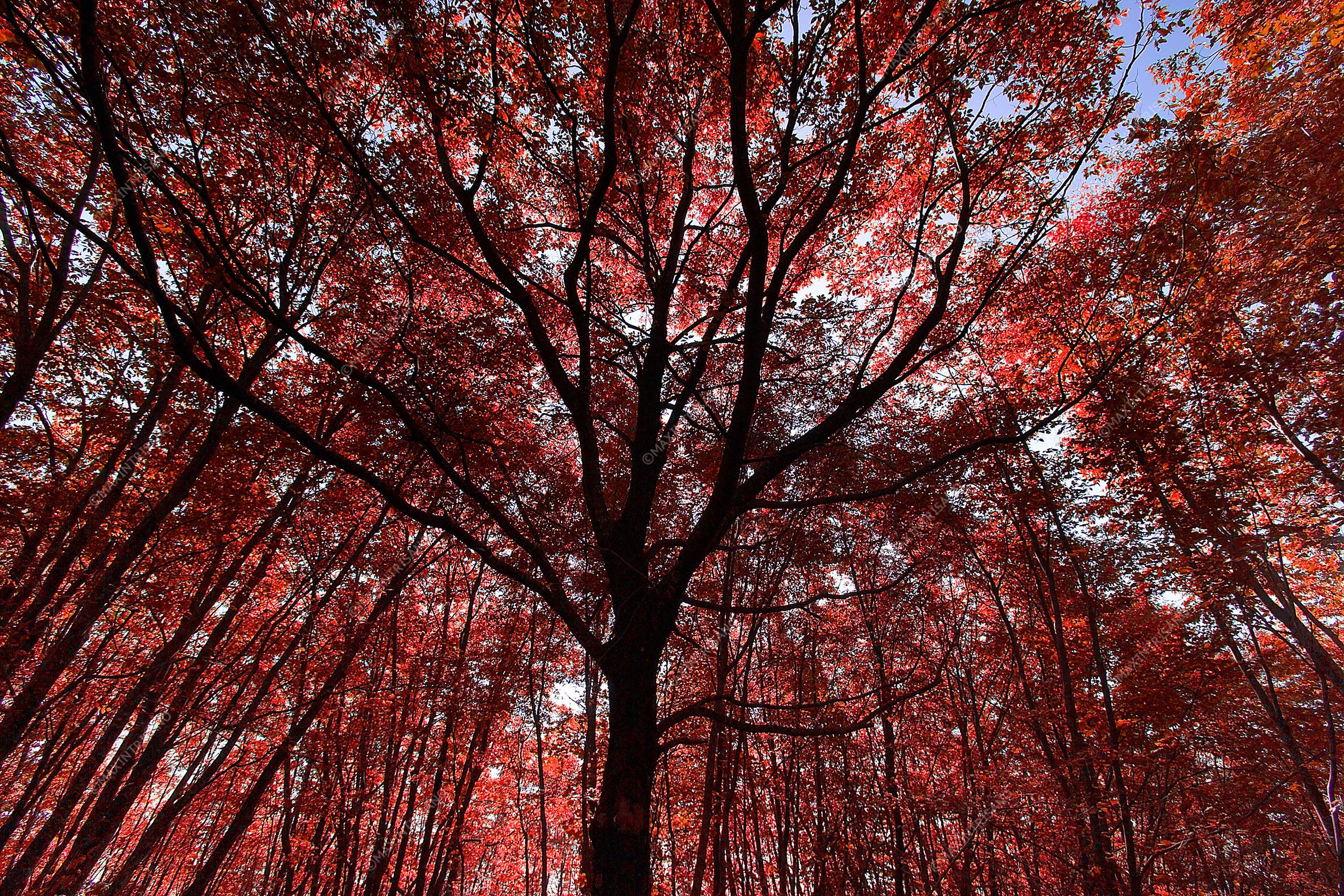 arbores